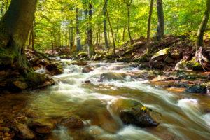Ilse, Ilsetal, river, forest, Harz, Saxony-Anhalt, Germany, Europe