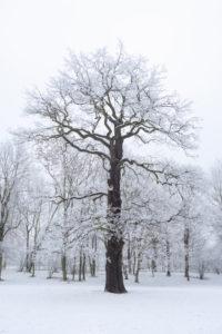 Snow, winter, forest, park, palm garden, Leipzig, Germany, Europe