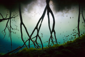 Diving in Car Wash Cenote Aktun Ha, Tulum, Yucatan, Mexico