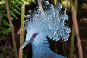 Shoal of Bluestripe Snapper, Lutjanus kasmira, New Ireland, Papua New Guinea