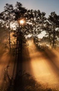 Morning impression in the Jasmund National Park, Ruegen Island