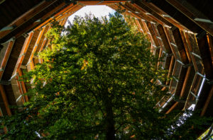 Beech, tree top path, Ruegen Island