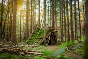 Naturhütte im Wald, Herbst, Grün,