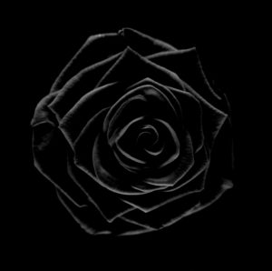 Schwarze Rose, Fine Art Fotografie, B&W