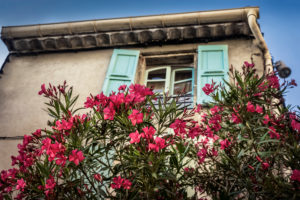 Flowering oleander, house, springtime, Coursan, Aude Department, Occitanie Region, France