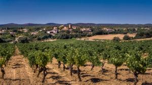 Vineyard in front of Assignan in summer