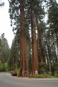 In Sequoia National Park in California, USA