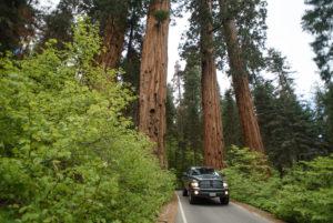 Car in Sequoia National Park in California, USA