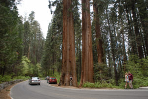 Road in Yosemite National Park, California, USA