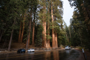 On the Road in Sequoia National Park in California, USA