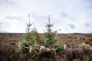 Weihnachtsbäume in den Wicklow Mountains, Irland