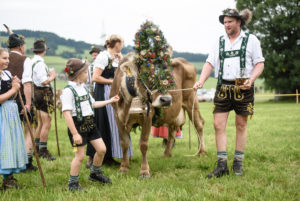 Traditional end-of-summer cattle drive from mountain pastures down to the valleys, Balderschwang in the Allgäu region