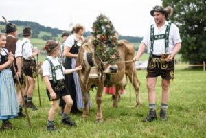 Viehabtrieb in Balderschwang im Allgäu