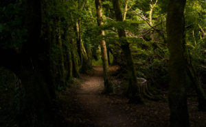 Magical forest section, Ireland, Killarney National Park