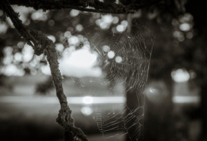 spiderweb in the sunlight, Bokeh