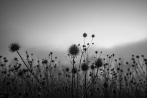 Plants, black-and-white, Bokeh