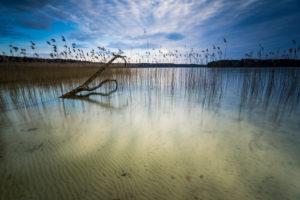 Lakeside, reed, dead tree, cloudy sky,