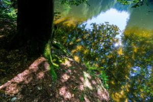 Riverside, Tree Trunk, Detail, Water Surface, Reflection,