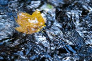 Brook, water, leaf, blur,