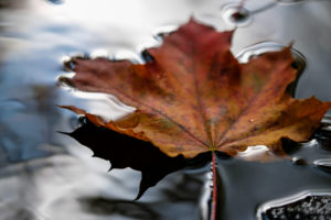 Autumn colors, water surface, floating leaf, river, detail,