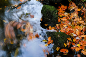 River, water surface, detail, autumn leaves,