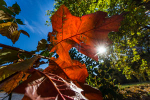 Lakeside, Branch, Detail, Leaves, Sun,