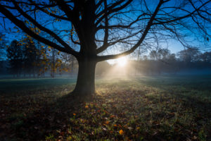 Autumn landscape, meadow, trees, bare, fog, back light,