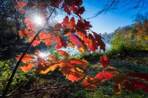 Riverside, View, Water Surface, Leaves, Detail, Sun,