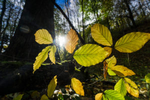 Forest, trees, detail, leaves,