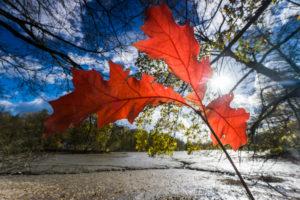 Lake shore, branch, detail, leaves, sun,