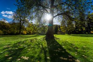 Meadow, tree, back light, sun,