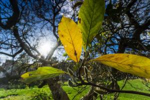 Deciduous tree, leaves, detail, autumn,