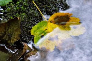 Stone, autumn leaves, brook, detail, long exposure,