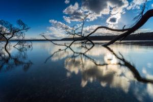 Lakeshore, trees, bleak, detail,