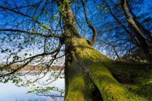Tree, trunk, mossy, detail,