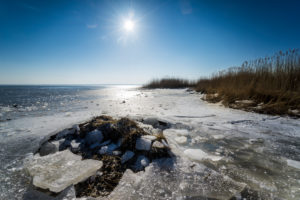 Winter at the frozen lake with sun in the backlight and Schilff on the shore
