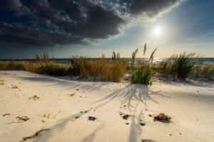 Baltic Sea with golden yellow beach grass in the sunlight