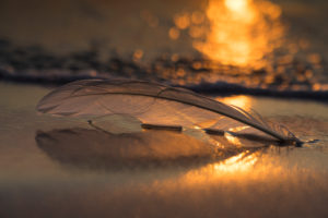 A feather on the beach of the Baltic Sea with setting sun and sun reflections