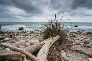 Fallen tree on Hiddensee beach with beautiful clouds on the beach and sun reflections