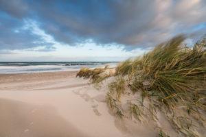 Baltic sea coast with beach grass in winter