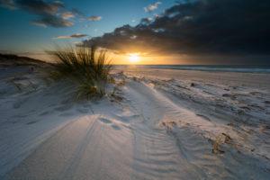 Baltic sea coast with beach grass in the evening light, winter