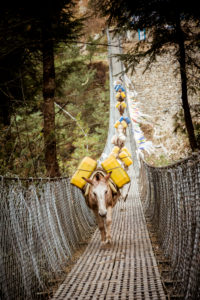 Esel Trek auf Hängebrücke, Lastesel, Transportesel
