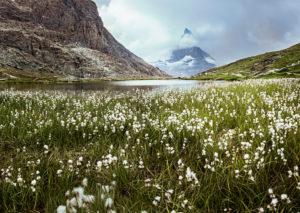Matterhorn in Wolken, Riffelsee mit Wollgrass im Vordergrund, Wallis, Schweiz,