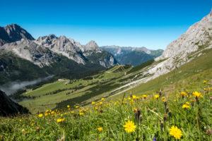 Flower meadow at the Ehrwalder Alm, Tyrol, Austria
