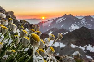 Margeriten am Becherhaus, Stubaier Alpen, Sonnenuntergang, Österreich