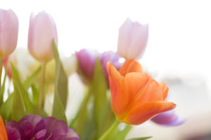 Bouquet, tulips, backlight, window, detail shot