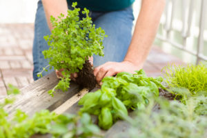 Kräutergarten selbst gestalten, Vertikalgarten, Einpflanzen