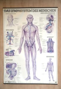 Poster, human lymphatic system, representation, indoors, medicine, health, illustration, poster, picture, science,