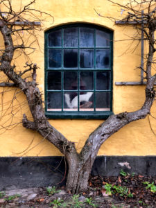 Window, House, When, Alsen, Island, Denmark
