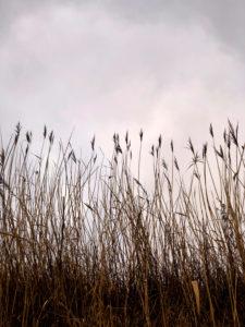 When, Alsen, Island, grasses, Denmark